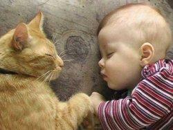 kedi bebek